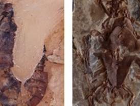 El singular registro de tortugas mesozoicas españolas