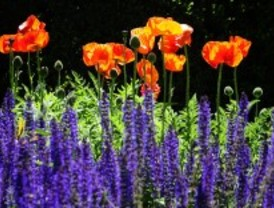 El Botánico, en primavera