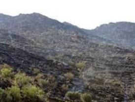 El matorral combate la desertificación