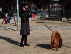 Alcobendas multará con 60 euros a los dueños de mascotas que no recojan sus excrementos
