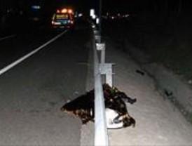 Muere un motorista al impactar contra un quitamiedos en la M-11