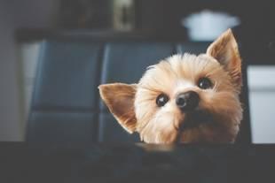 Frutas y verduras para perros: recomendaciones para complementar su dieta regular
