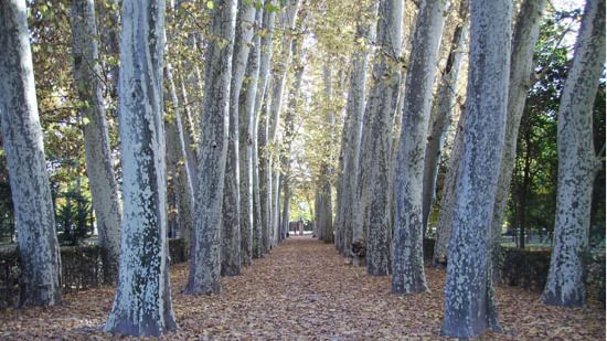 Los Jardines del Real Sitio de Aranjuez abren completamente a partir del 30 de enero