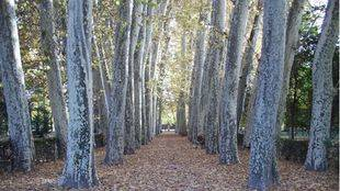 Jardín del Príncipe en Aranjuez