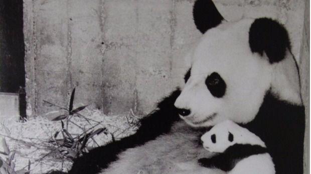 'Chu-lin' se incorpora a la exposición 'Biodiversidad' del Museo de Ciencias Naturales