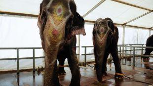 Villa de Vallecas aprueba prohibir circos con animales en el distrito