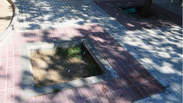 Sabanés denuncia que el Gobierno de Botella no cumplió la ley del árbol