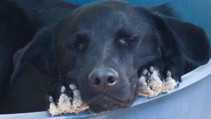 Centro hará un análisis del estado de las mascotas de las personas 'sin hogar'