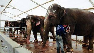 El Gran Circo Mundial actuará en Madrid del 3 al 13 de marzo con espectáculos de elefantes