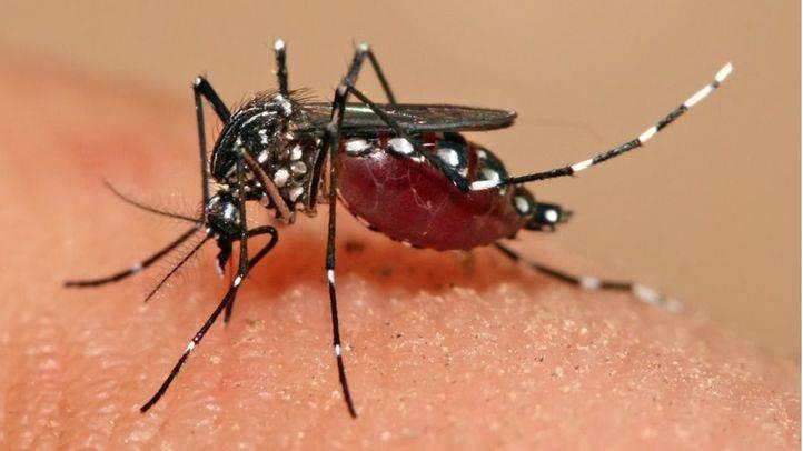 Sanidad notifica 2 nuevos casos de Zika en embarazadas en Madrid