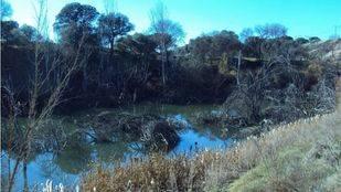 La Confederación Hidrográfica del Tajo termina la limpieza del río Manzanares a su paso por El Pardo