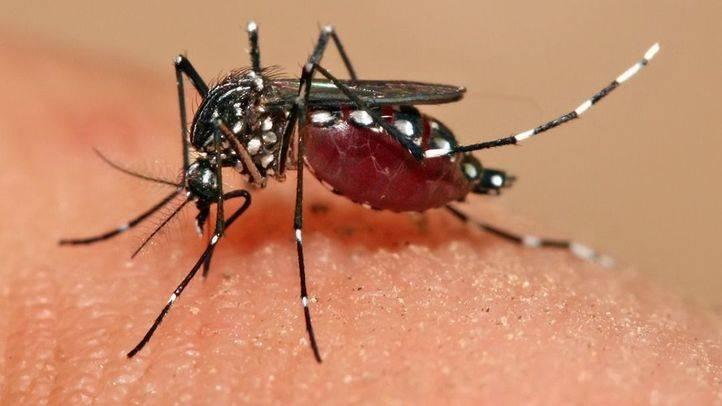 Aumenta a 13 el número de casos del virus Zika en la provincia madrileña