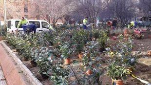 Remodelación de jardines en Chamberí