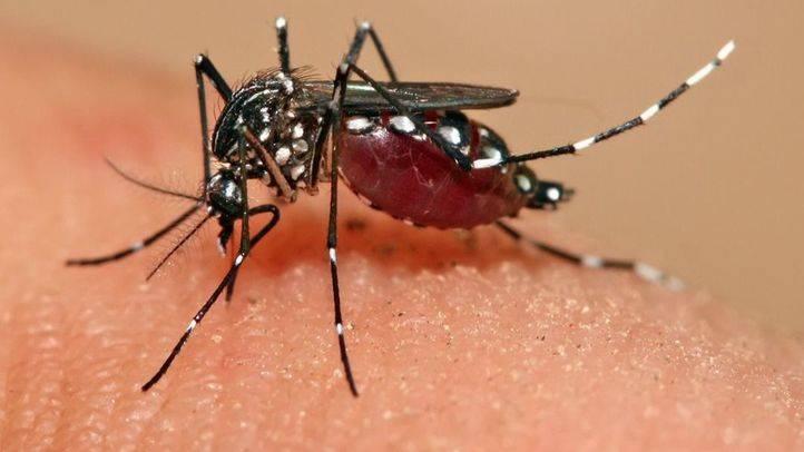 Confirmado el tercer caso de Zika en una embarazada en Madrid