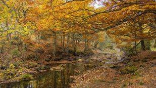 La conservación del Hayedo de Montejo, prioridad de la Fundación Montemadrid