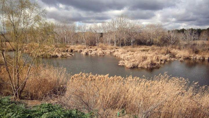 La Confederación Hidrográfica del Tajo limpia el río Henares para luchar contra los mosquitos
