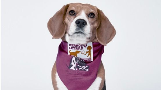 El Corte Inglés organiza una jornada educativa con libros y mascotas