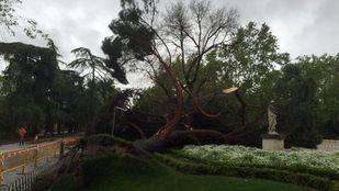 Cae un árbol en el Retiro tras un aguacero