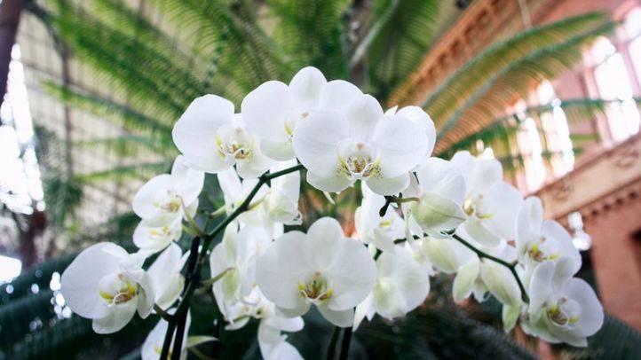 Las orquídeas conquistan el corazón de Atocha