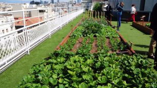 El Ayuntamiento estudia instalar huertos urbanos en los tejados