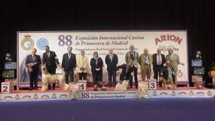 Un bichón maltés gana la Exposición Internacional Canina de Primavera en la feria 100x100 mascota