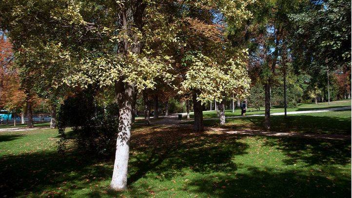 Los árboles del parque del Retiro (Archivo)