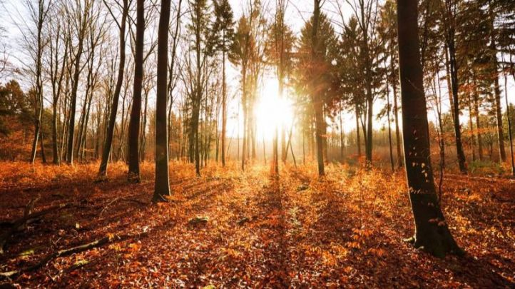 Atardecer en un bosque otoñal