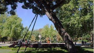 Parque Retiro, árbol con una sujección metálica para evitar que su inclinación le haga caer por el peso. (Archivo)