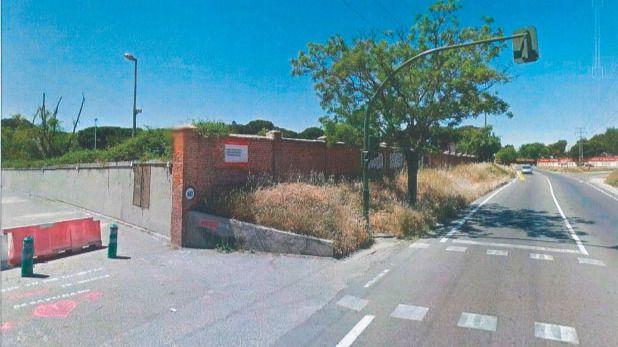 El Ayuntamiento talará 16 árboles para ampliar la carretera de La Fortuna