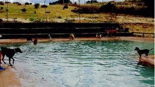 Brunete acoge la primera piscina para perros de la región