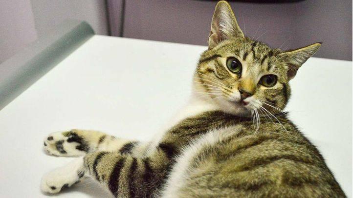 Gato callejero (archivo).