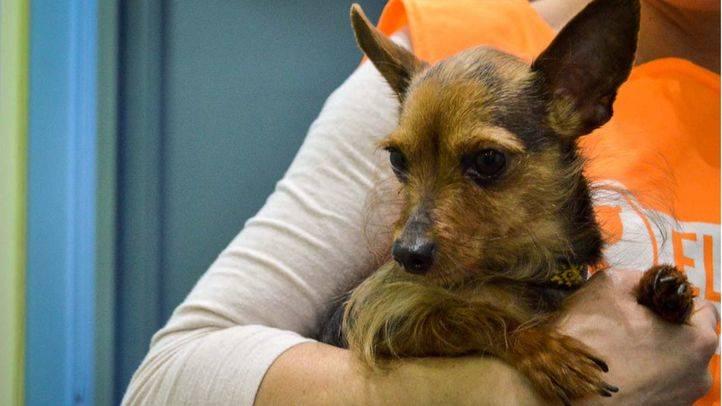 El PP pedirá una moratoria sobre la prohibición de venta de animales domésticos en tiendas