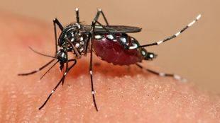 Sanidad cifra en 49 los casos de Zika en Madrid