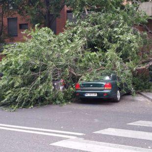 Cae la rama de un árbol en Arganzuela sin causar daños personales