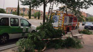 Una mujer de 45 años resulta herida al caer un árbol en el Ensanche de Vallecas