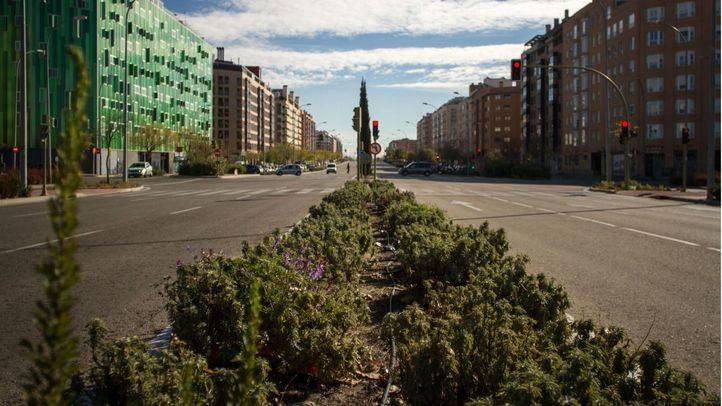 El Ensanche de Vallecas será ajardinado desde septiembre