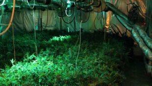 Cultivo de marihuana en Villanueva de Perales (archivo)