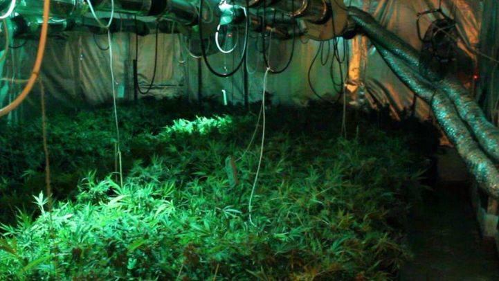 Detenidos tres miembros de una organización especializada en el cultivo de marihuana en Collado Villalba