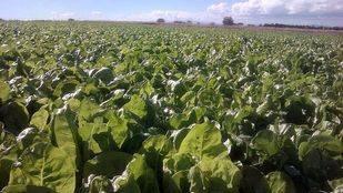 Un mercado recorrerá 24 municipios madrileños para dar a conocer los alimentos de la zona