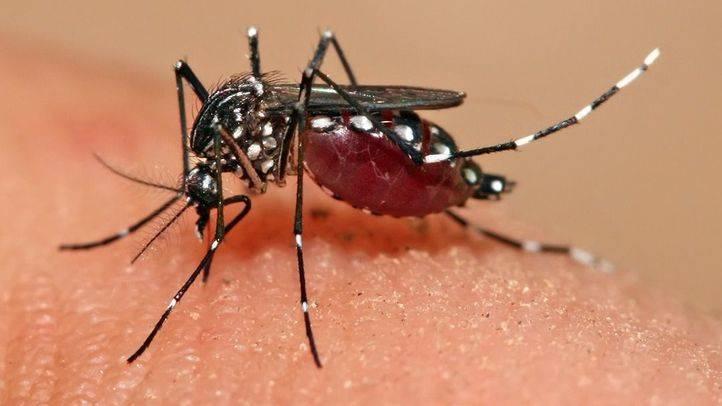 Aumentan a 237 los casos de Zika confirmados en España, 60 en Madrid