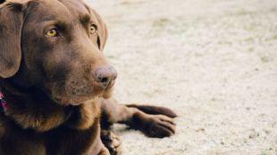 Comida para animales; seguridad y variedad