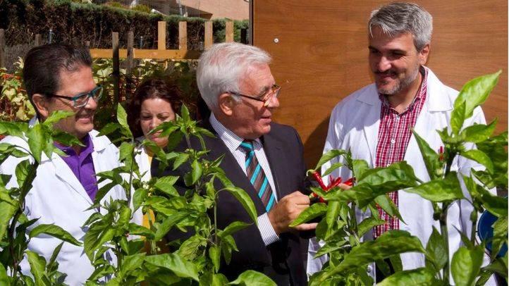 Sanidad realizará un estudio sobre los beneficios que aporta en pacientes el cultivo de un huerto 'terapéutico'