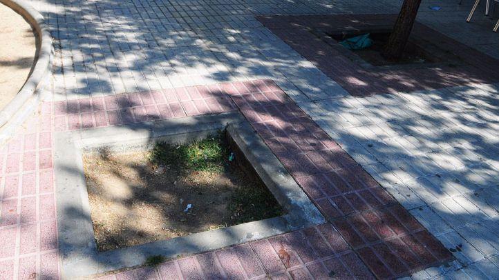Madrid se da dos años para plantar árboles en los 7.000 alcorques vacíos