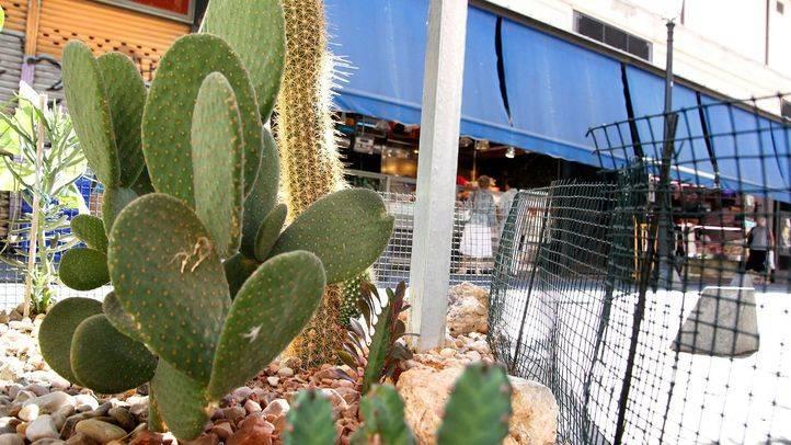 Comerciantes y vecinos de Lavapiés convocan una jornada de adopción de alcorques