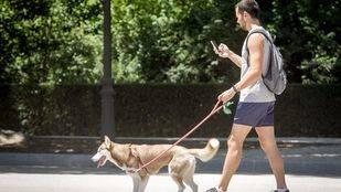 Alerta en Parla al descubrir varias trampas con veneno para perros