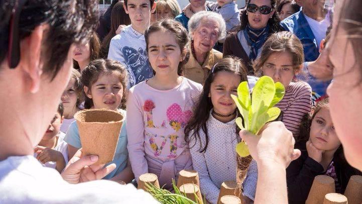 Huertos urbanos de la Fundación Montemadrid