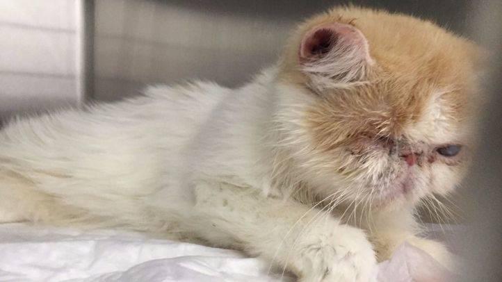Rescatados 25 gatos en situación de