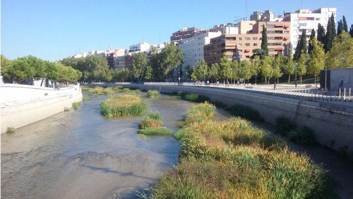 Los remeros podrán volver al Manzanares cuando se repare la presa número 9