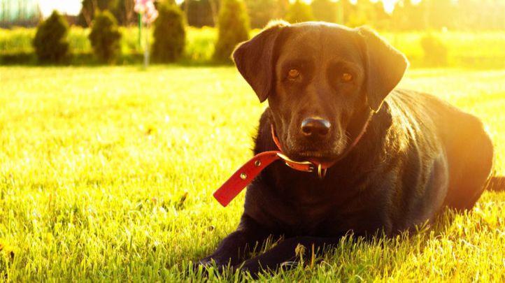 ¿Cómo prevenir los problemas de salud de mis mascotas?