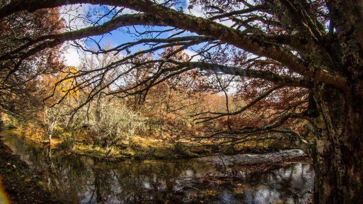 Paseos de otoño por hayedos y castañares